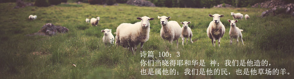 arec_slide_sheep_text_JPEG